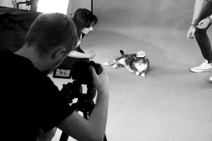 Kot z poznańskiego Schroniska filmowany przez Fresh Brand Design