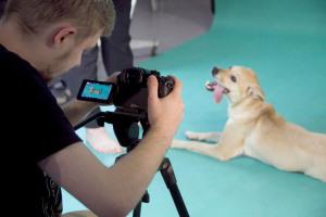 Psy z poznańskiego Schroniska filmowane przez Fresh Brand Design